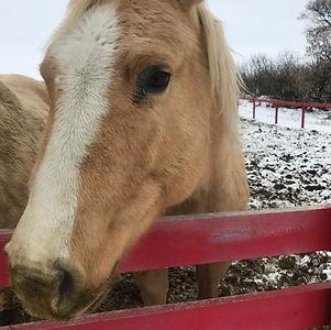 horse - luna.JPG