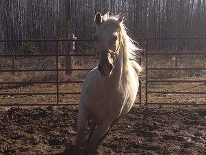 horse riding brandon