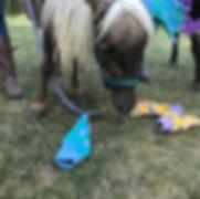 horse - firecracker.JPG