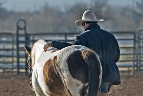 cowboy-horse-pony-western-53011_edited.j
