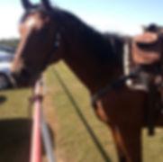horsemanship brandon