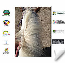 Research on Equine Assisted Learning