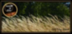 Elevage Terre de Zébu au coeur d'un ranch familial