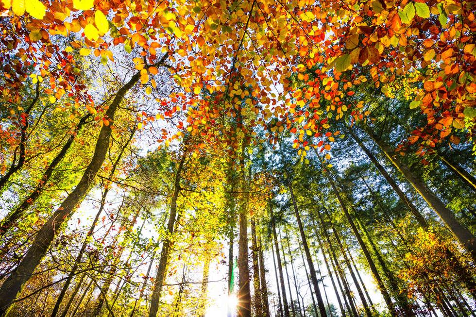 Canaston Woods, Pembrokeshire