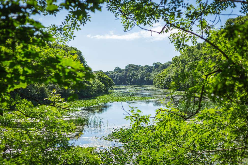 Bosheston Lily Ponds