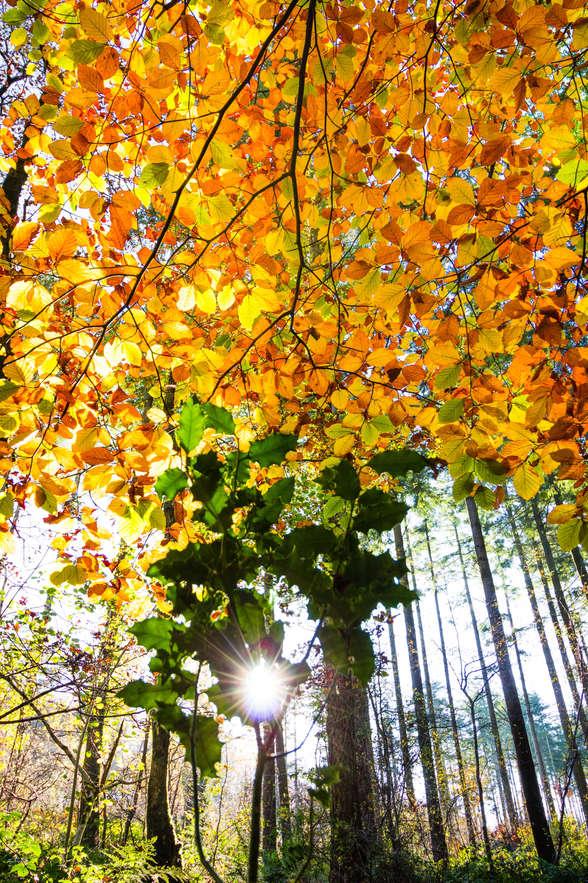 Canaston Woods - Pembrokeshire