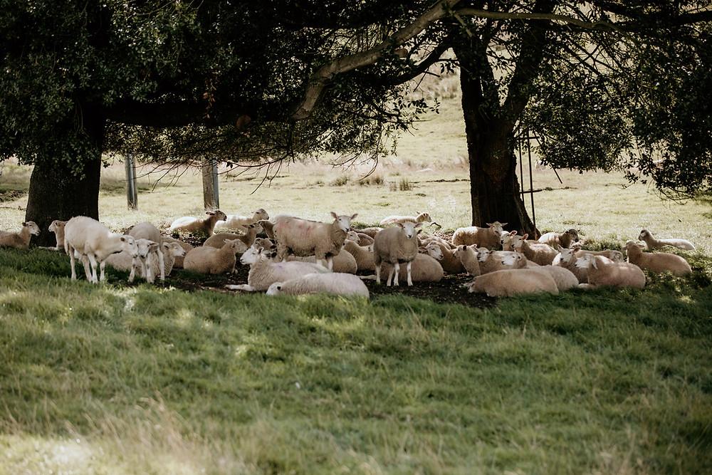 the cotswolds, wedding, venue, kingscote, barn, gloucester, cheltenham, best, photographer, photography, rustic, alternative, countryside, sheep, neil, williams, photographer,
