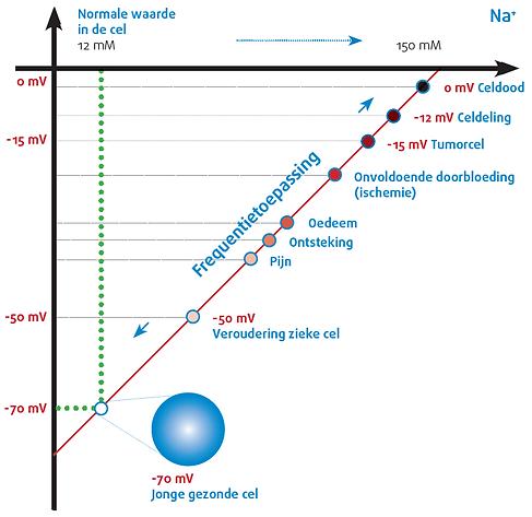 spanning-celmembraan (1).png