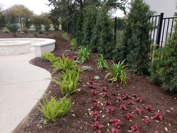 Mulched beds - Low maintenance landscaping with Privacy Trees