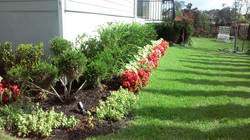 Formal Garden Xeriscape Color