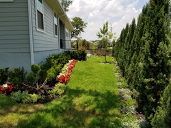 Privacy Trees, Sod, Spring Color Beds