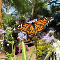 Garden Pollinator.jpg