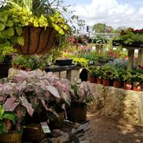 Patio Ready plantings_edited.jpg