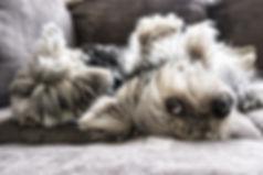 dogs-2597201_1920 (2).jpg