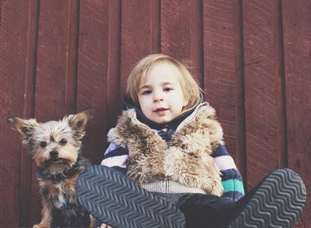 La infancia y los animales