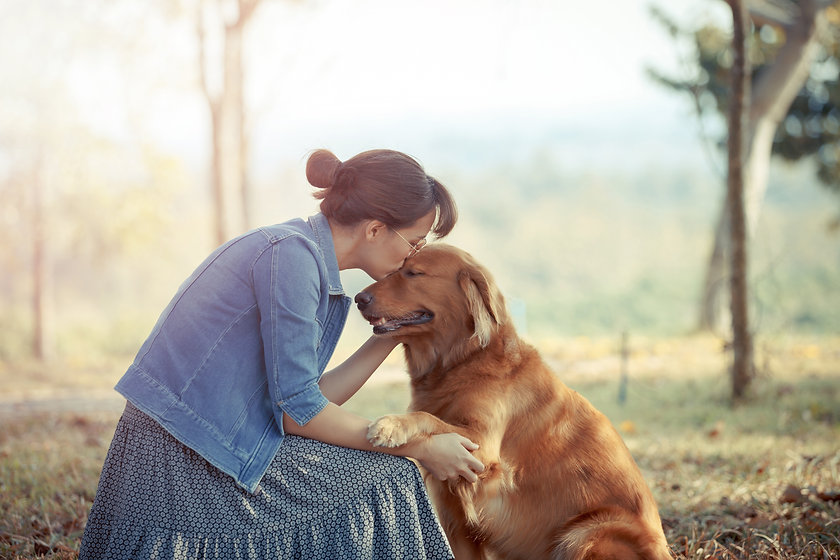 Beautiful woman with a cute golden retriever dog.jpg