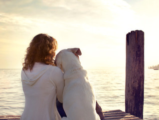 Losing a Companion Animal Can Be Harder Than Losing a Relative or Friend: Not Just Opinion but Reali