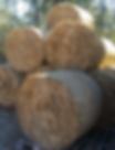 sugar-cane-round-bales-533x960.jpg.png