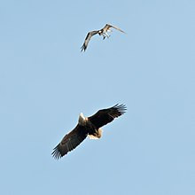 The Eagles and the Thermals