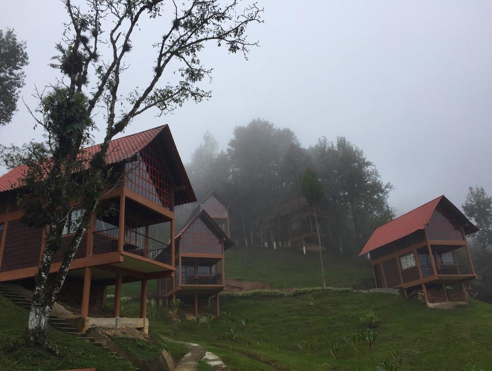 Cabañas independientes con Vista al Bosque