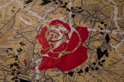 Flower_closeup_1