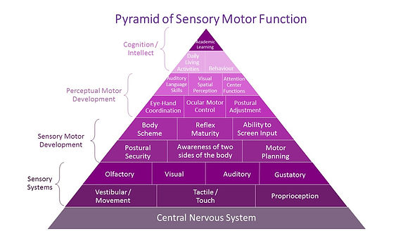 Pyramid of Sensory Motor Function