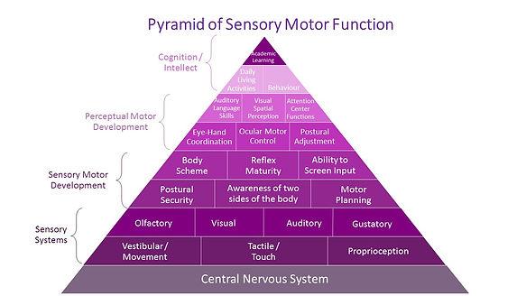 Pyramid of Sensory Motor Function