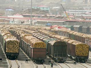 Вывоз грубо обработанной древесины ограничат новыми пошлинами