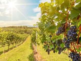 Известно, как формируется реестр виноградопригодных земель.