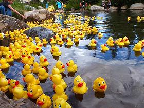 rubber ducks.jpg