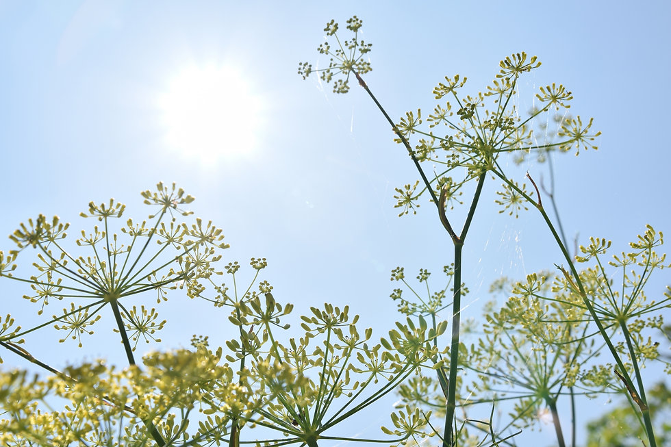 Healing Salon fennel | 岐阜県羽島郡 | 悩み相談