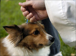 Blessing of the Animals, Click here