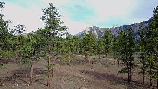 McGregor Ranch Estes Park Post Management