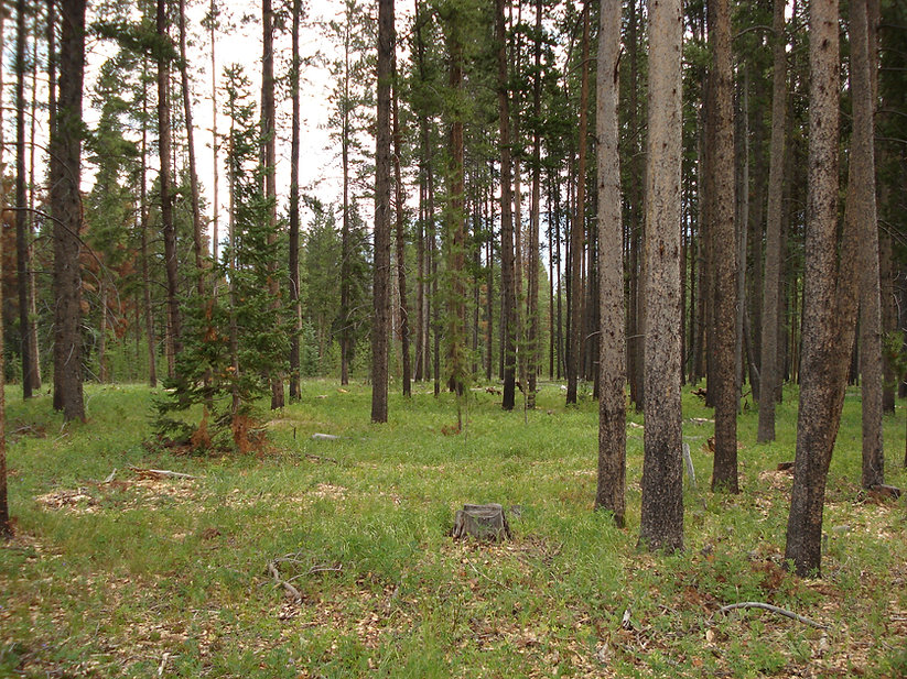 Forest Resotoration