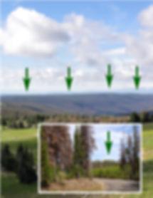 Managed Forest, Regeneration, New Forest