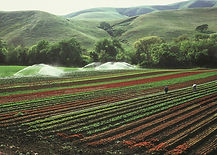 irrigation_3.jpg
