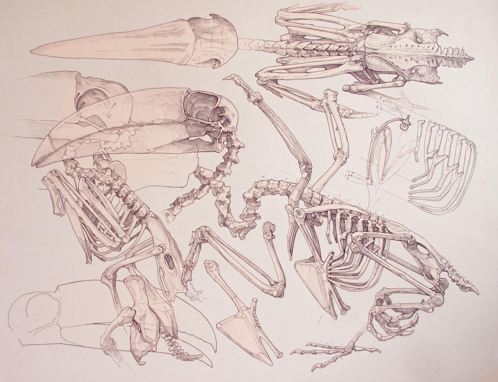 Toucan Study