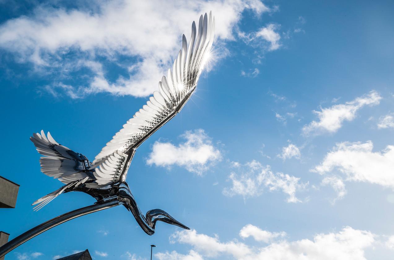 Heron_Durham City UK 2017
