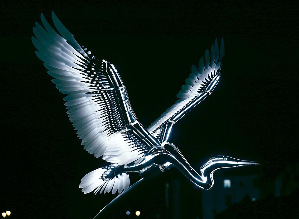 Heron Illuminated