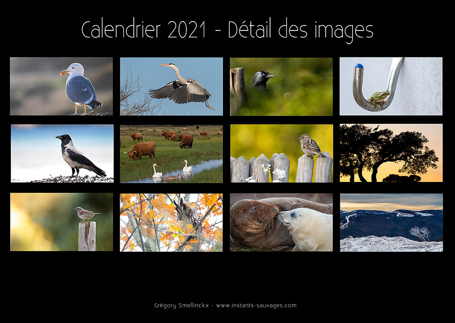 Photos calendrier 2021 web.jpg