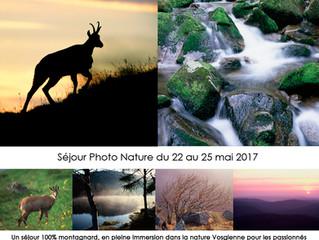 Séjour Photo Nature dans les Vosges
