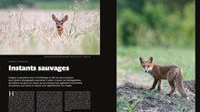 Portfolio dans l'Oiseau Magazine