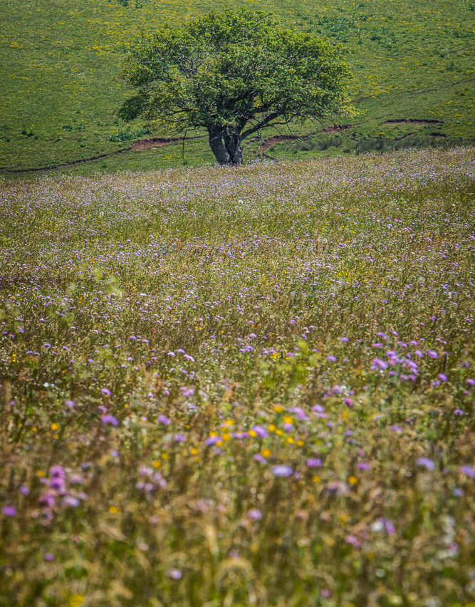 028_Prairie fleurie