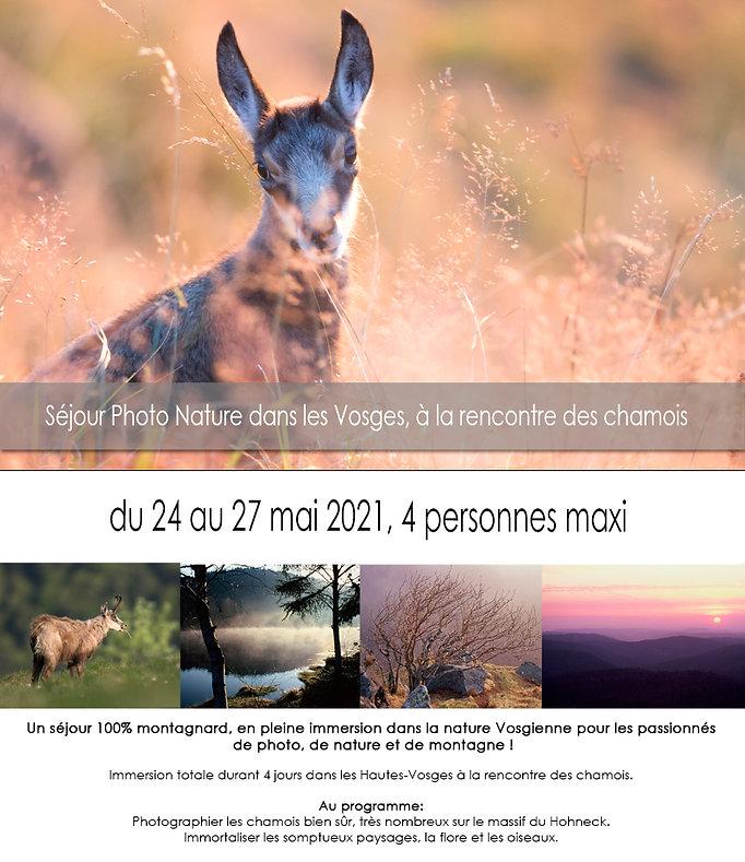Stage photo nature dans les Vosges