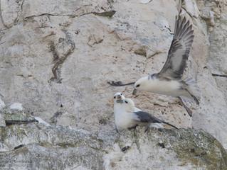 Retour en images sur le séjour photo nature en baie de Somme