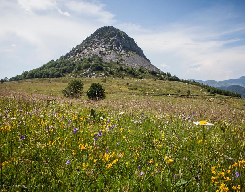 022_Mont Gerbier de Jonc