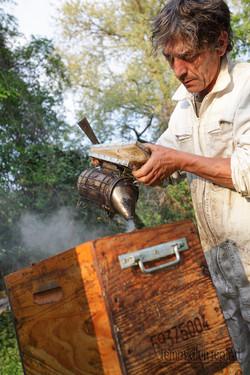 Récolte du miel de tilleul, Aisne