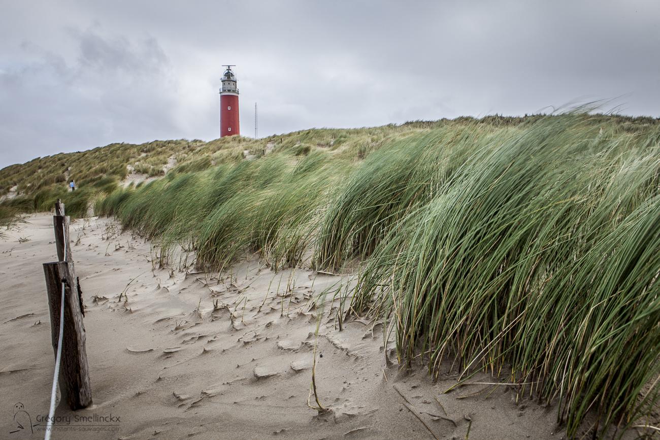 023_Le vent souffle sur le phare de Texel_MG_0460