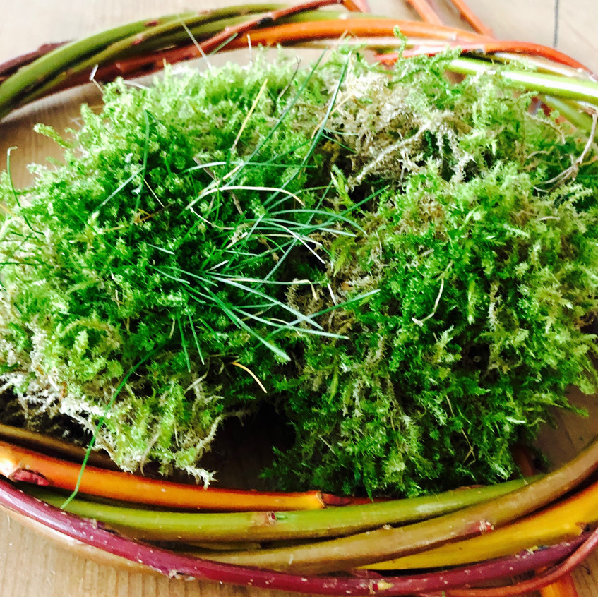 Willow and moss wreath