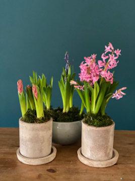 Small spring bulb pot